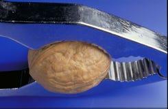 在坚果薄脆饼干的Wallnut 库存照片