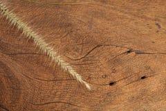 在坚硬木头的草花 免版税库存图片