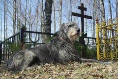 在坟墓附近的狗 免版税图库摄影