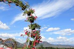 在垂悬在曲拱的树罐的花 库存图片