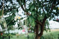 在垂悬在树的瓶子的花 库存照片