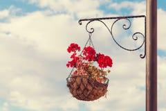 在垂悬在街道杆的篮子的红色大竺葵 图库摄影