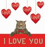 在垂悬的旧布心脏2附近的猫 库存图片