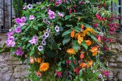 在垂悬的篮子的各种各样的花在石墙上 免版税库存照片