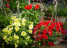 在垂悬的罐的五颜六色的花,在一个木立场 免版税图库摄影