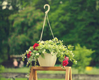 在垂悬的罐的五颜六色的花,在一个木立场 库存图片