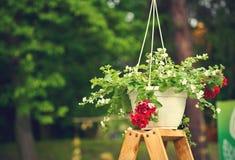 在垂悬的罐的五颜六色的花,在一个木立场 免版税库存图片
