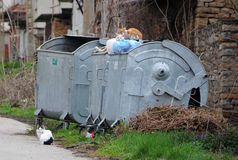 在垃圾容器的三只离群猫 库存图片