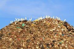 在垃圾的鸟 图库摄影