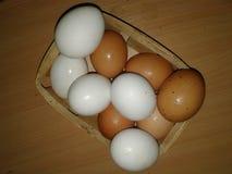 在垃圾的鸡鸡蛋 绿叶 免版税库存照片