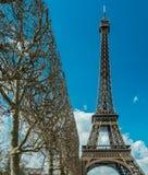 在埃佛尔铁塔附近的平直的被整理的树在巴黎法国 库存照片