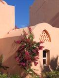在埃及建筑学墙壁上的美丽的开花植物  库存照片