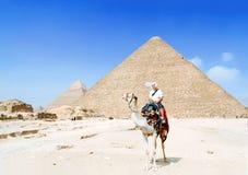 在埃及沙漠供以人员在骆驼的旅游骑马 免版税库存照片