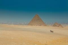 在埃及金字塔backround的骆驼有蓬卡车 库存照片