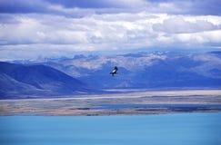 在埃尔卡拉法特,巴塔哥尼亚,阿根廷附近的在飞行中神鹰和安第斯山脉 免版税库存照片