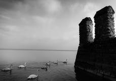 在城堡墙壁(艺术)旁边的天鹅 免版税库存照片