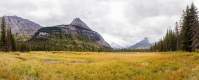 在城堡山-冰川国家公园下的黄色草甸 库存照片