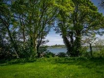 在城堡病区附近的美好的自然在北爱尔兰 库存图片
