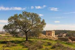 在城堡montain的树  库存图片