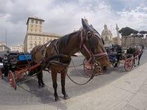在城堡St安吉洛之外的马支架 库存照片