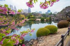 在城市东京的看法 库存照片
