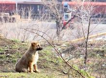 在城市丢失的逗人喜爱的小狗 免版税库存图片