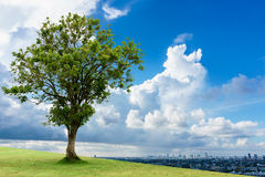 在城市保存呼吸的绿色树 库存图片