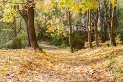 在城市公园环境美化在晴朗的秋天天 免版税库存图片