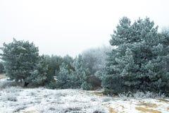 在城市公园胡同的冬天风景  免版税库存照片