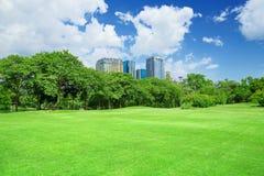 在城市公园,草坪 免版税图库摄影