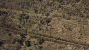 在城市内并且包括树的不同的类型的一个绿色森林的平稳的飞行 股票视频