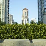 在城市前面的小的灌木 库存图片