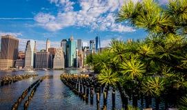 在城市和杉树的早晨视图 免版税图库摄影