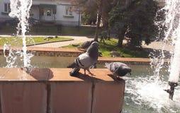 在城市喷泉的两只鸽子 库存照片