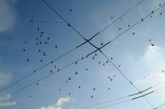 在城市的天空的鸟 免版税库存照片