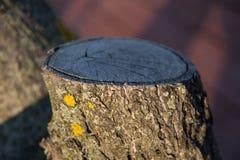 在城市看见了树 库存图片