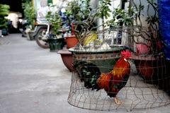 在城市街道上的笼中的鸡 免版税库存图片