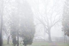 在城市街道上的雾 免版税图库摄影