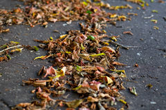 在城市路面的秋叶 免版税库存图片