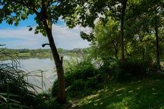 在城市边缘的遮荫木质的湖边在晴朗的夏天早晨 库存图片