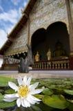 在城镇人寺庙前面的浪端的白色泡沫百合 免版税库存图片