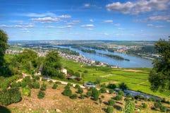 在城镇Ehrenfels, Ruedelsheim,黑森,德国附近的葡萄园 库存图片