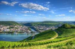 在城镇Ehrenfels, Ruedelsheim,黑森,德国附近的葡萄园 免版税库存照片