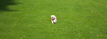 在域中间的小的狗 库存照片