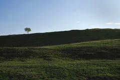 在域的偏僻的唯一结构树 免版税图库摄影
