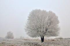 在域的偏僻的结构树 库存照片