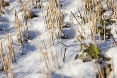 在域的冬天 免版税库存照片