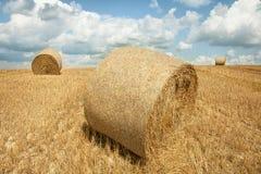 在域的干草捆 库存照片