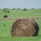 在域的干草捆 免版税图库摄影