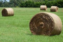 在域的干草 库存图片